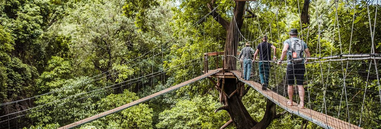 Treetop Walkway Lake Manyara National Park