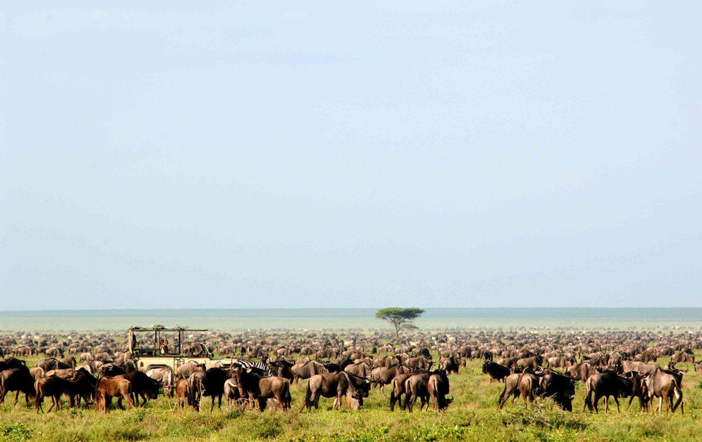Total safari experience, all in
