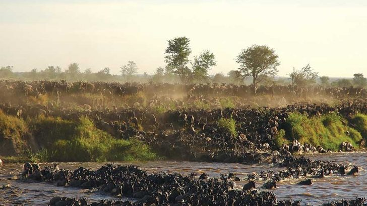 The best time to visit the Serengeti