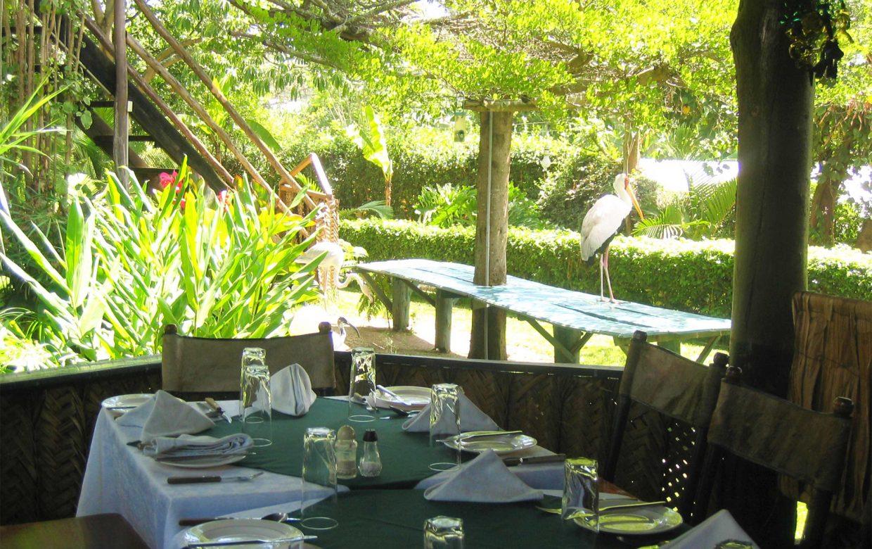 Explore Tanzania - Accommodatie Arusha - L'Oasis Lodge