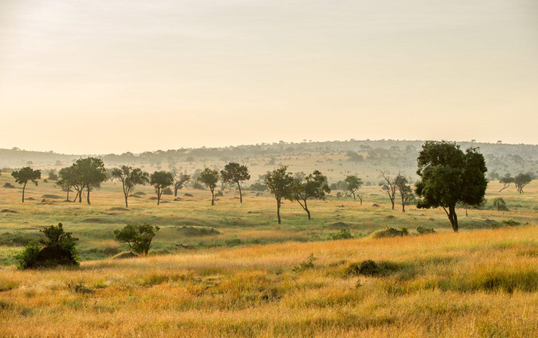 Explore Tanzania - Accommodatie Selous Game Reserve - SiwanduExplore Tanzania - Accommodatie Serengeti - Mara Mara Tented Lodge