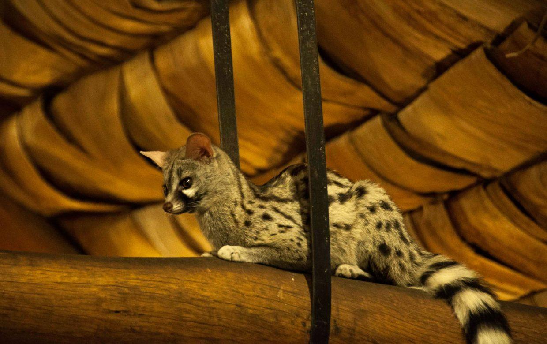 Explore Tanzania - Accommodatie Selous Game Reserve - SiwanduExplore Tanzania - Accommodatie Serengeti - Ndutu Safari Lodge