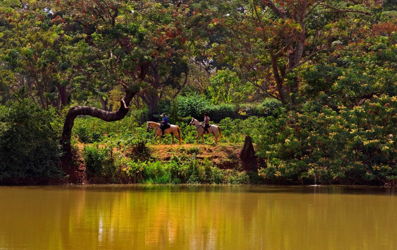 Accommodatie West Kilimanjaro - Makoa Farm