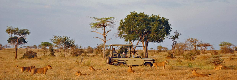 Multifaceted safari and beach
