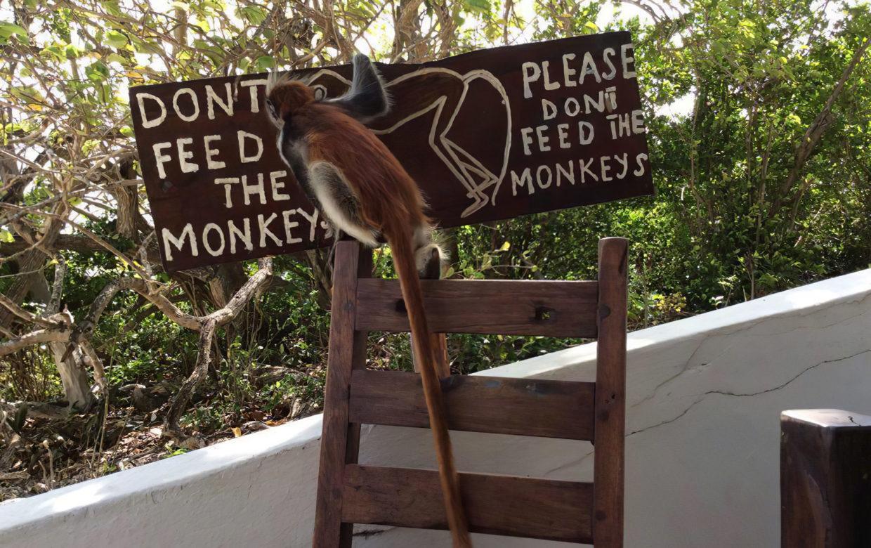 Red Monkey Lodge