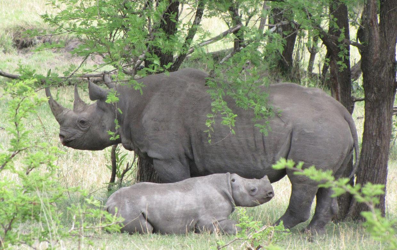 Baby Boom in the bush bush